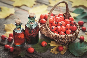 Правила выбора качественных продуктов - плоды боярышника и его полезные свойства