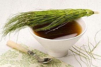 Правила заготовки лекарственных растений - хвощ полевой и его польза