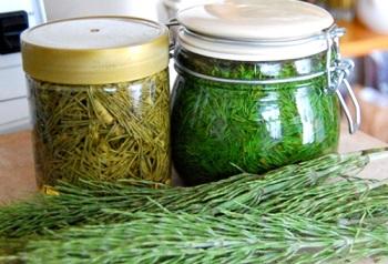 Противопоказания к употреблению полевого хвоща и действие травы на организм