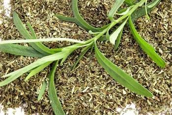 Растение тархун - целебные свойства и противопоказания