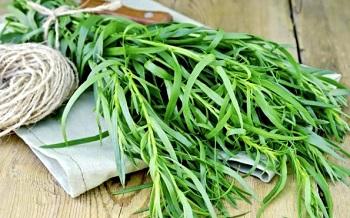 Трава тархун - влияние растения на организм человека