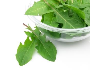 Состав и калорийность листьев одуванчика