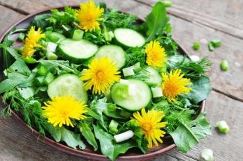 Применение в кулинарии листьев одуванчика