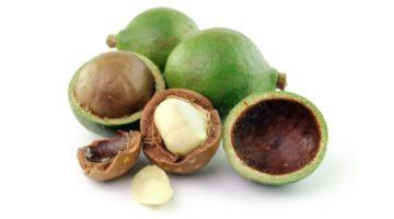 Орех макадамия: полезные свойства и противопоказания, области применения, польза и вред