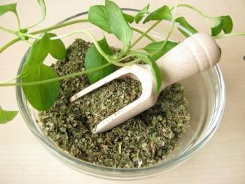 Полезные свойства майорана и противопоказания, советы по выбору продукта