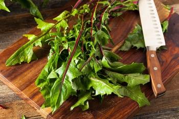 Применение листьев одуванчика в народной медицине