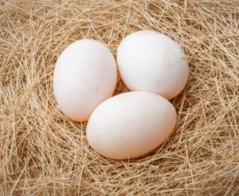 Применение гусиных яиц в кулинарии