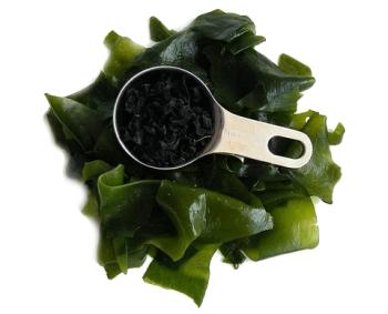 Полезные свойства водорослей вакаме для мужчин и женщин