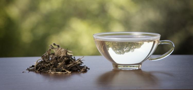 Белый чай: польза и вред, полезные свойства и противопоказания, области применения
