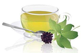 Чем полезен отвар из элеутерококка, полезные свойства напитка для организма