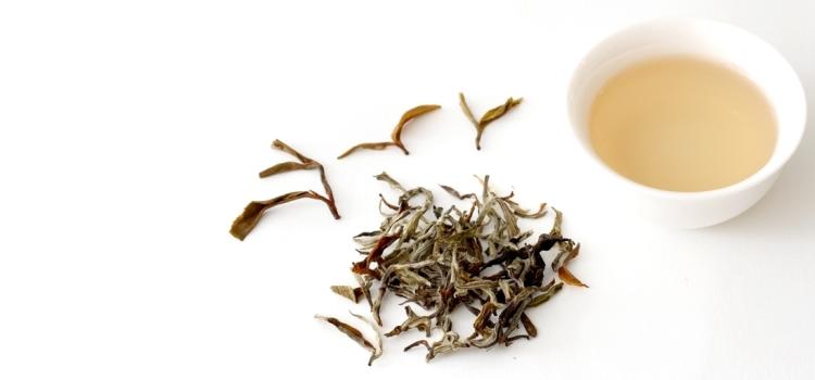 Белый чай: польза и вред, состав и калорийность, фото