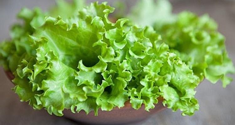Полезные свойства листа салата