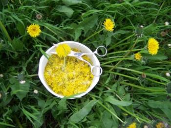 Как правильно варить варенье из одуванчиков - польза и вред лакомства