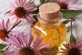 Эхинацея: лечебные свойства и противопоказания, применение в народной медицине