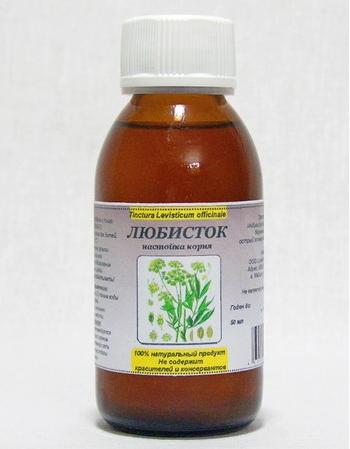 Любисток: полезные и лечебные свойства, противопоказания, применение в народной медицине