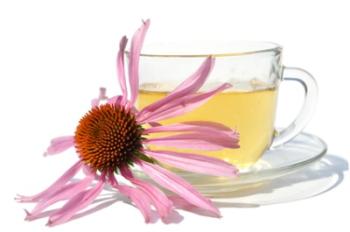 Эхинацея: лечебные свойства и противопоказания, польза и вред для диабетиков, аллергиков, спортсменов