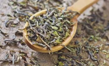 Курильский чай: полезные и лечебные свойства для мужчин и женщин, противопоказания