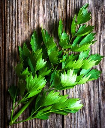Любисток: полезные и лечебные свойства и противопоказания, польза для здоровья