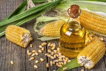 Свежие початки кукурузы и бутылочка с маслом