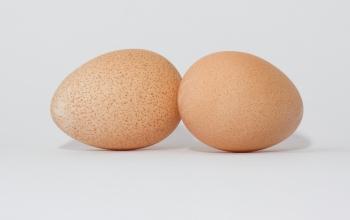 Яйца цесарки: польза и вред, рекомендации по употреблению