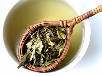 Белый чай: польза и вред, правила заваривания