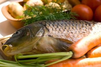 Ценные свойства рыбы сазан, рецепты приготовления