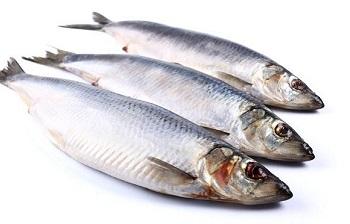Чем полезна рыба салака, ценные свойства и правила приготовления