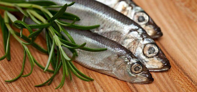 Рыба салака, полезные свойства и калорийность