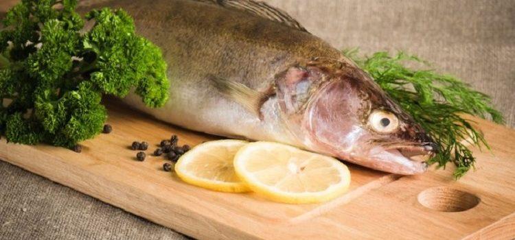 Судак - полезные свойства, калорийность рыбы на 100 грамм