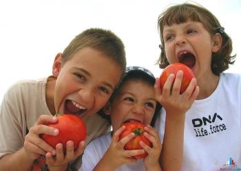 Все подробности о полезных свойствах и составе помидоров