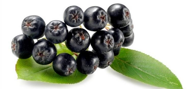 Самое важное о лечебных свойствах черноплодной рябины и ее употреблении