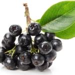 Полезные свойства черноплодной рябины, и как они используются в народной медицине