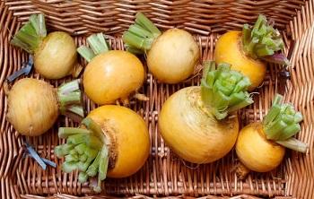 Репа - польза для здоровья и условия хранения продукта