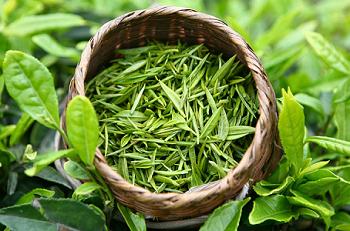 Зеленый чай, его лечебный эффект и другие области применения