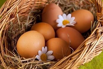 Как правильно выбрать и хранить куриные яйца