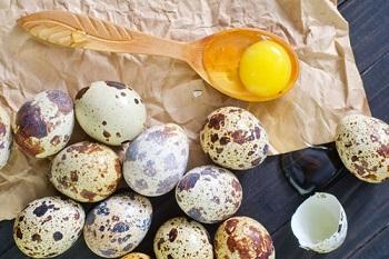 Перепелиные яйца, их полезные свойства и противопоказания к употребелению