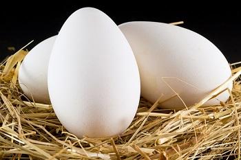 Полезные свойства и химический состав утиных яиц