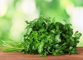 Зелень петрушки - как правильно выбрать и хранить этот продукт
