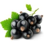 Чем полезна черная смородина для нашего организма?