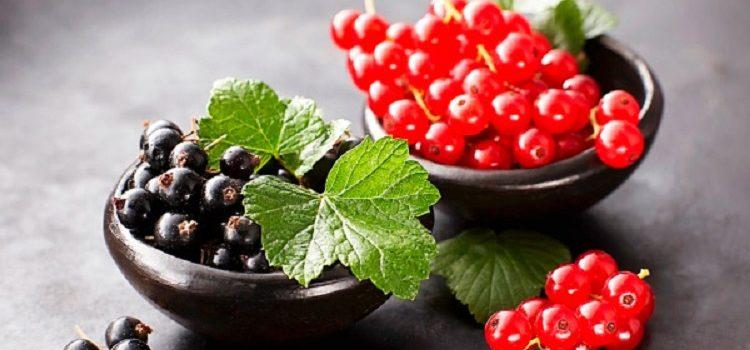 Листья смородины - пролезные свойства, противопоказания и рецепты приготовления