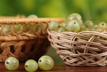 Крыжовник - правила хранения замороженных ягод
