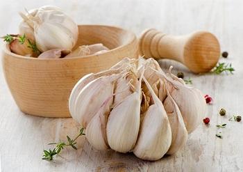 Полезные свойства чеснока и в каком виде можно употреблять целебный продукт