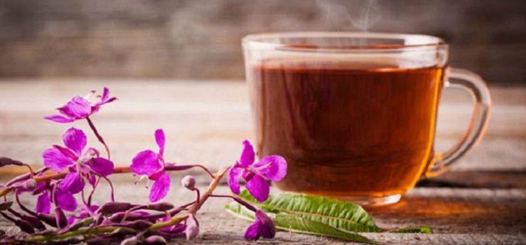 Целебная трава иван-чай, ее полезные свойства, лечебный эффект и противопоказания