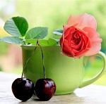 В чем польза чая из листьев вишни и его целебные свойства для организма