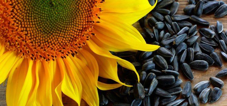 О пользе и вреде семечек подсолнуха для мужчин