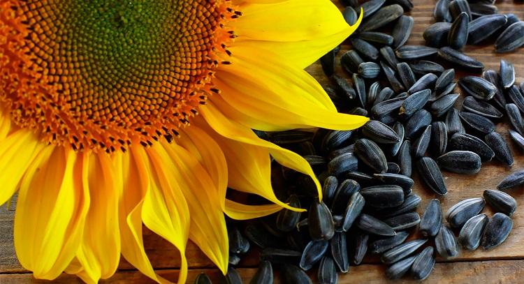 Какими витаминами и микроэлементами богаты семечки подсолнечника