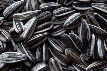 Полезные свойства семечек подсолнуха для женщин и в чем его польза для организма