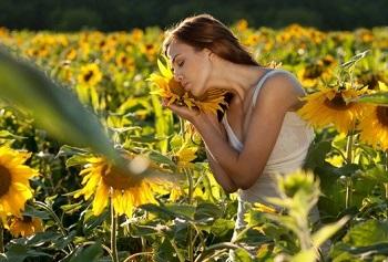 Применение семян подсолнечника для похудения и красоты - советы женщинам
