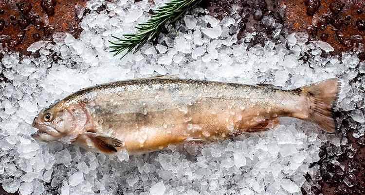 Как выбрать рыбу голец в магазине - полезные советы