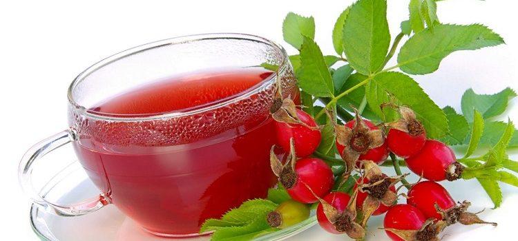 Отвар шиповника - все о пользе и вреде напитка для организма человека
